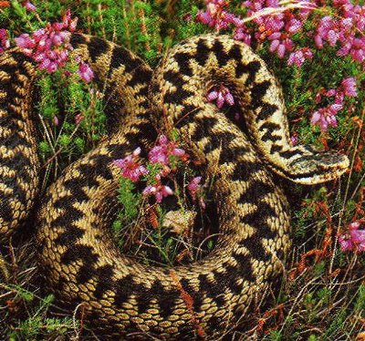 Yes (it's an adder)